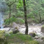 بوستان جنگلی صفارود – رامسر