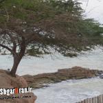 گزارشی تصویری از سفری به بندر بوشهر _خلیج فارس(گزارشی از فلاح)