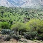 منطقه حفاظت شده میان جنگل