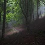 جنگل الیمستان -آمل