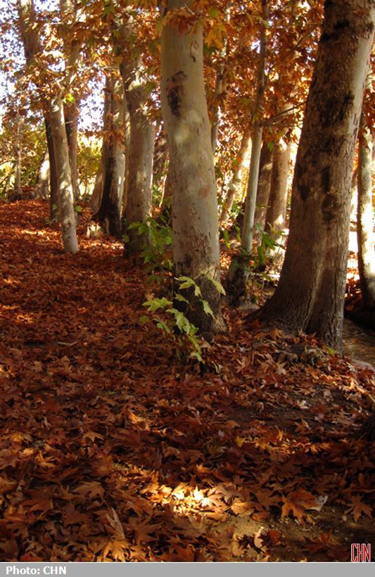 پاییز مهریز یزد1