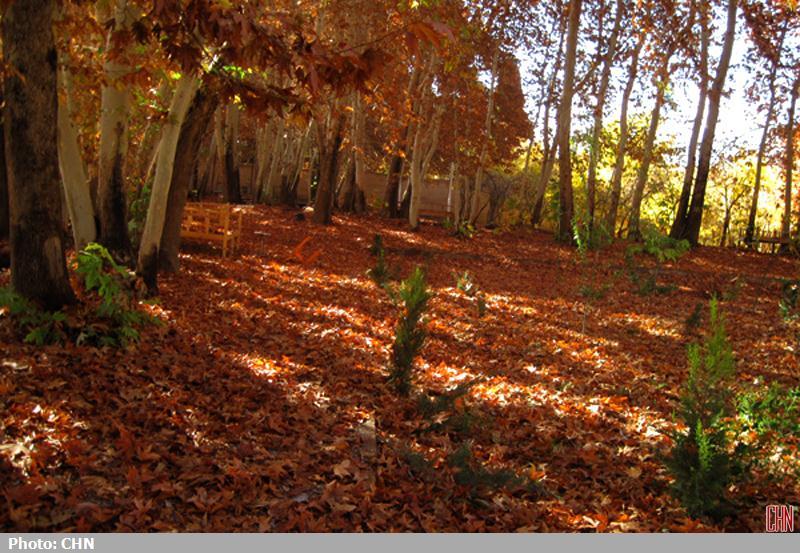 پاییز مهریز یزد2