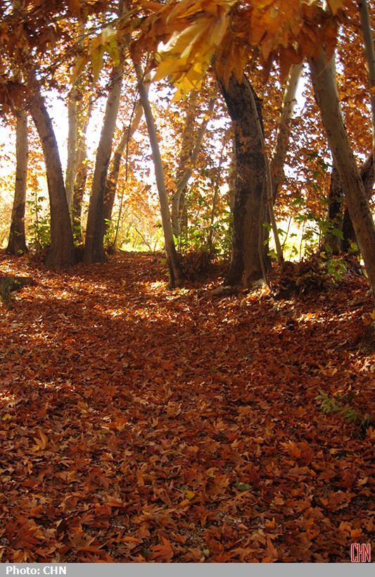 پاییز مهریز یزد3
