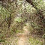 پارک ملی دز