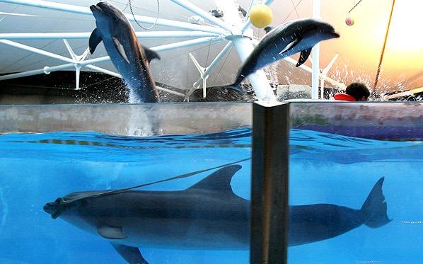 دلفین 20