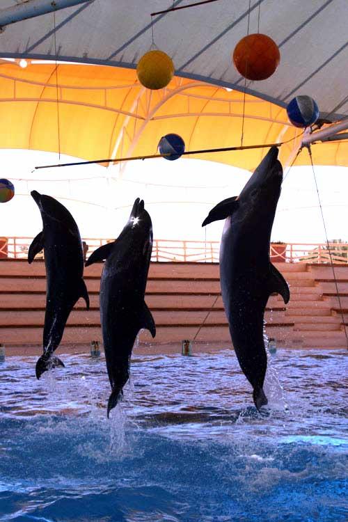 دلفین 29