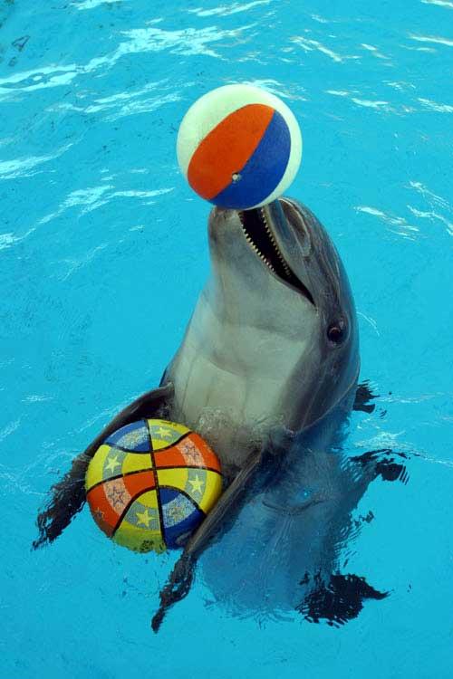 دلفین 3