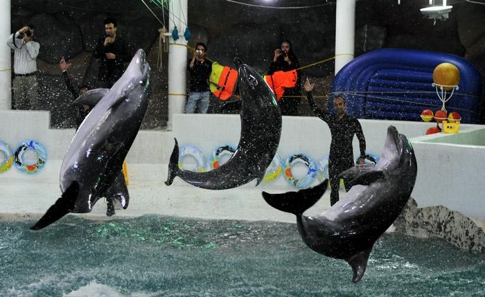 دلفین 378