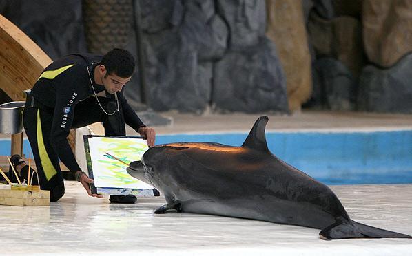 دلفین 4