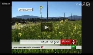 ویدیو مزارع کلزا
