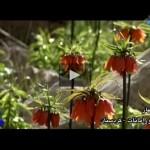 ویدیو بهار اوامانات