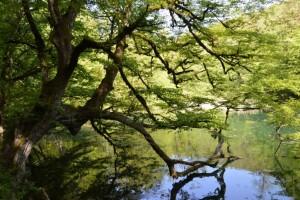 طبیعت زیبای تالاب فراخین نوشهر