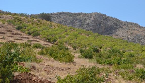 منطقه شکار ممنوع کوه عیش اعلی و کفه طاقستان، ابرکوه